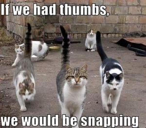 column_004-FUNNY-CAT-MEMES